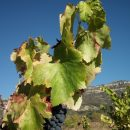 Priorat Vineyards at the foothills of Montsant