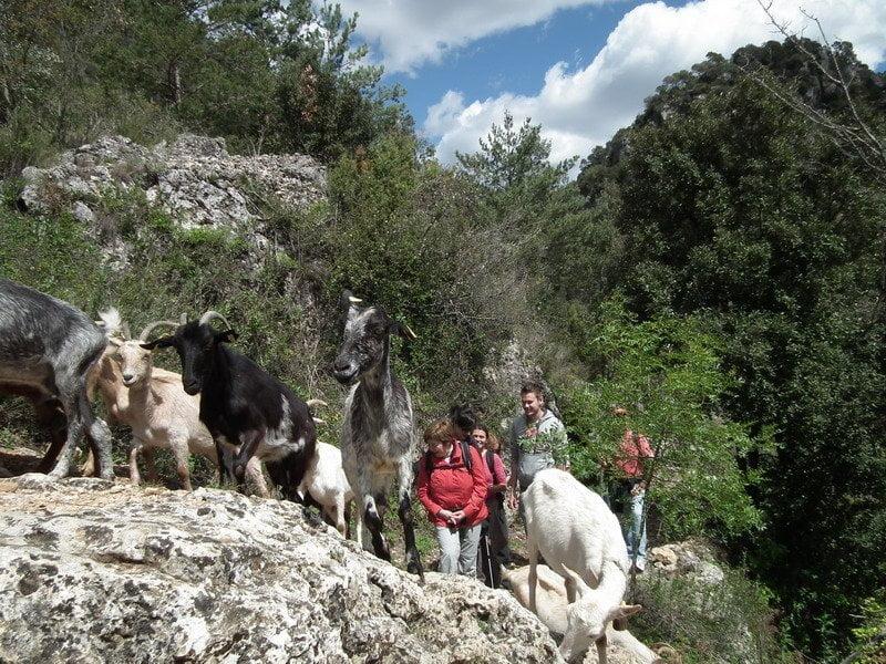 1 dia fent de pastor a Muntanyes de Prades