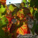 Fall in Priorat wine region