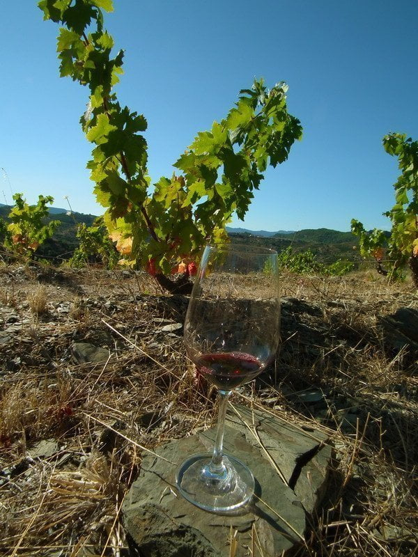 Wine tasting experience in Priorat