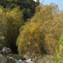 Riu Brugent a Farena, Muntanyes de Prades