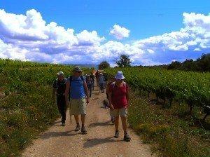 Caminando entre viñedos