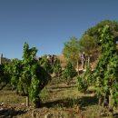 Walking and wine tourism in Gratallops, Priorat