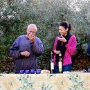 Organic olive oil tasting in Montsant, Priorat