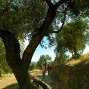 Olive trees in Horta de Sant Joan, Els Ports