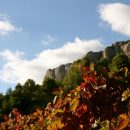Vineyards and Montsant