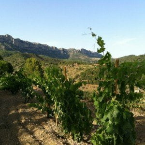 Vineyards of DOQ Priorat in Scaladei