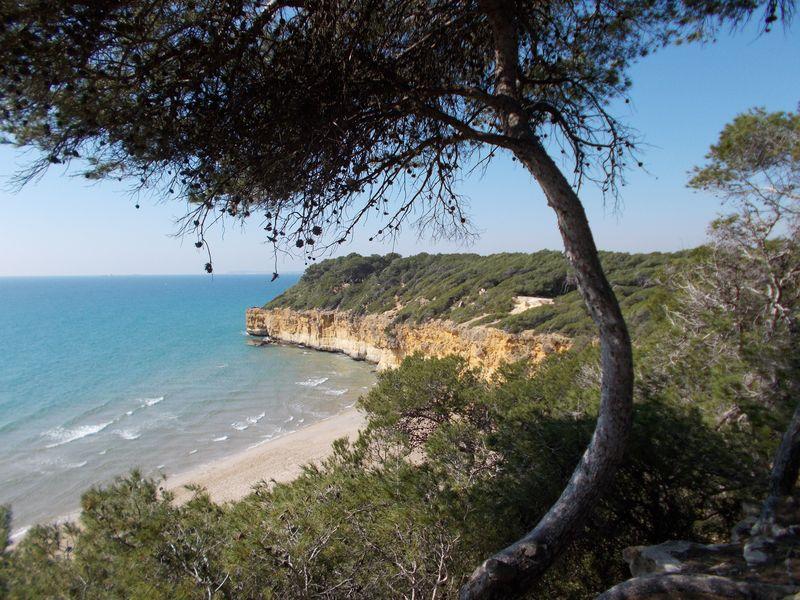 Altafulla - Bany de boscos vora mar
